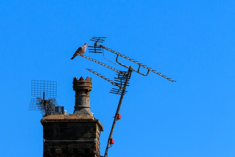 bird on external aerial